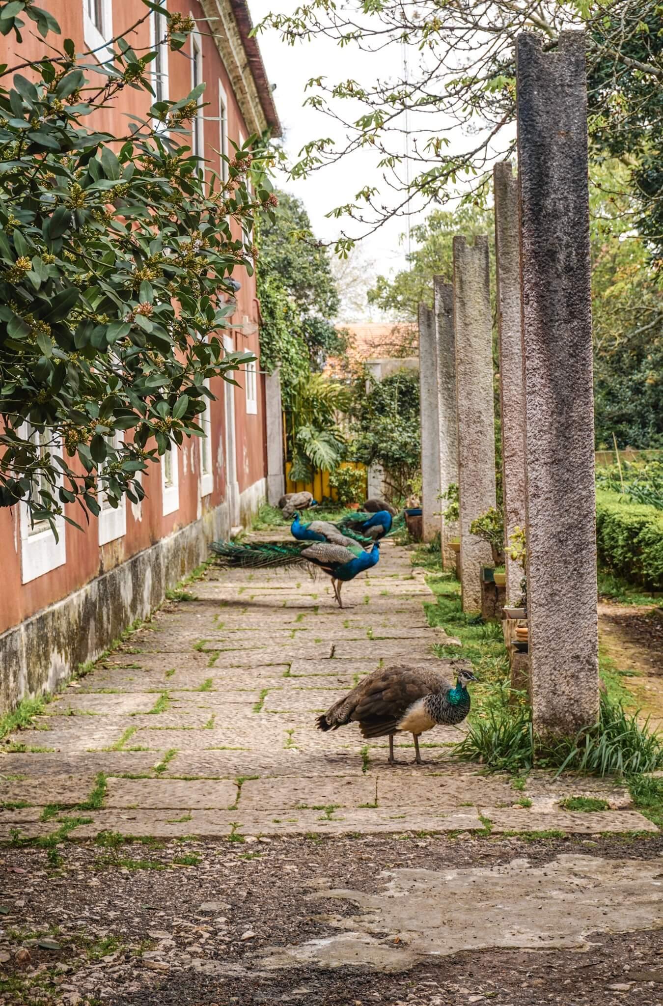 jardin botanique quartier belem