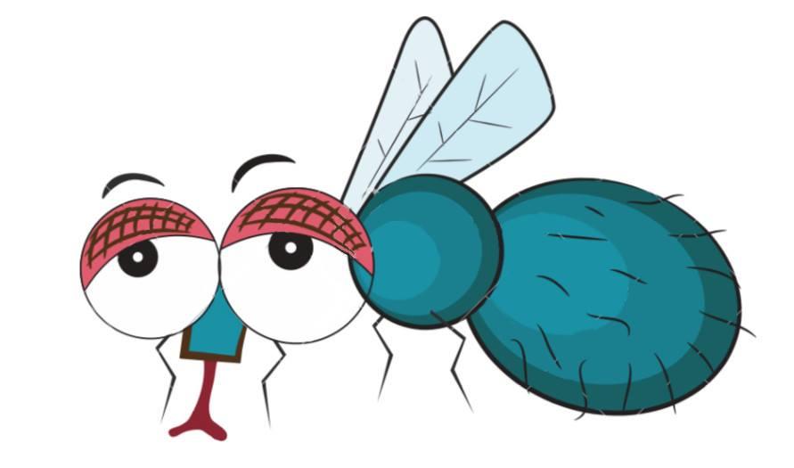 zone paludisme moustique