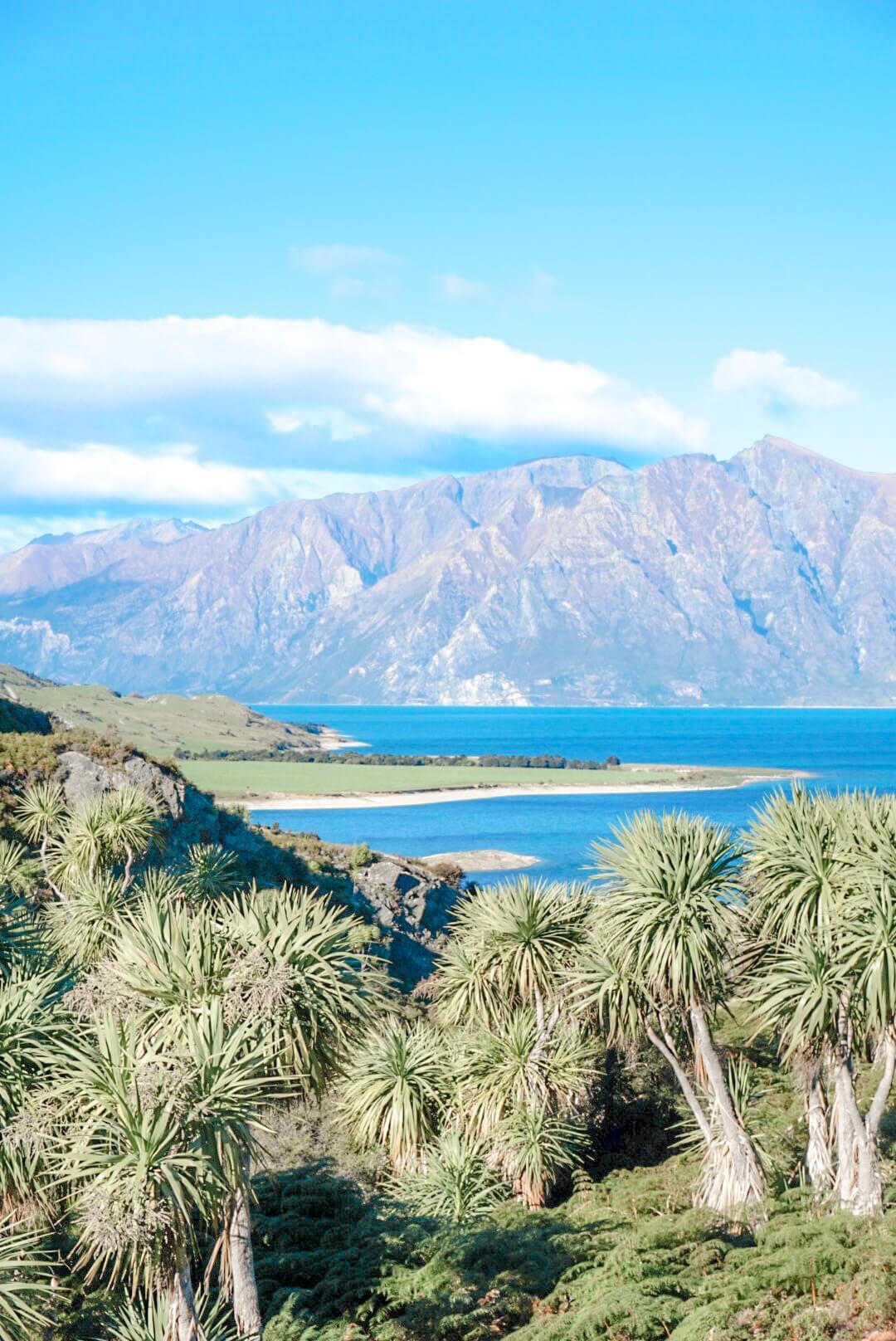 point de vue wanaka nouvelle zelande