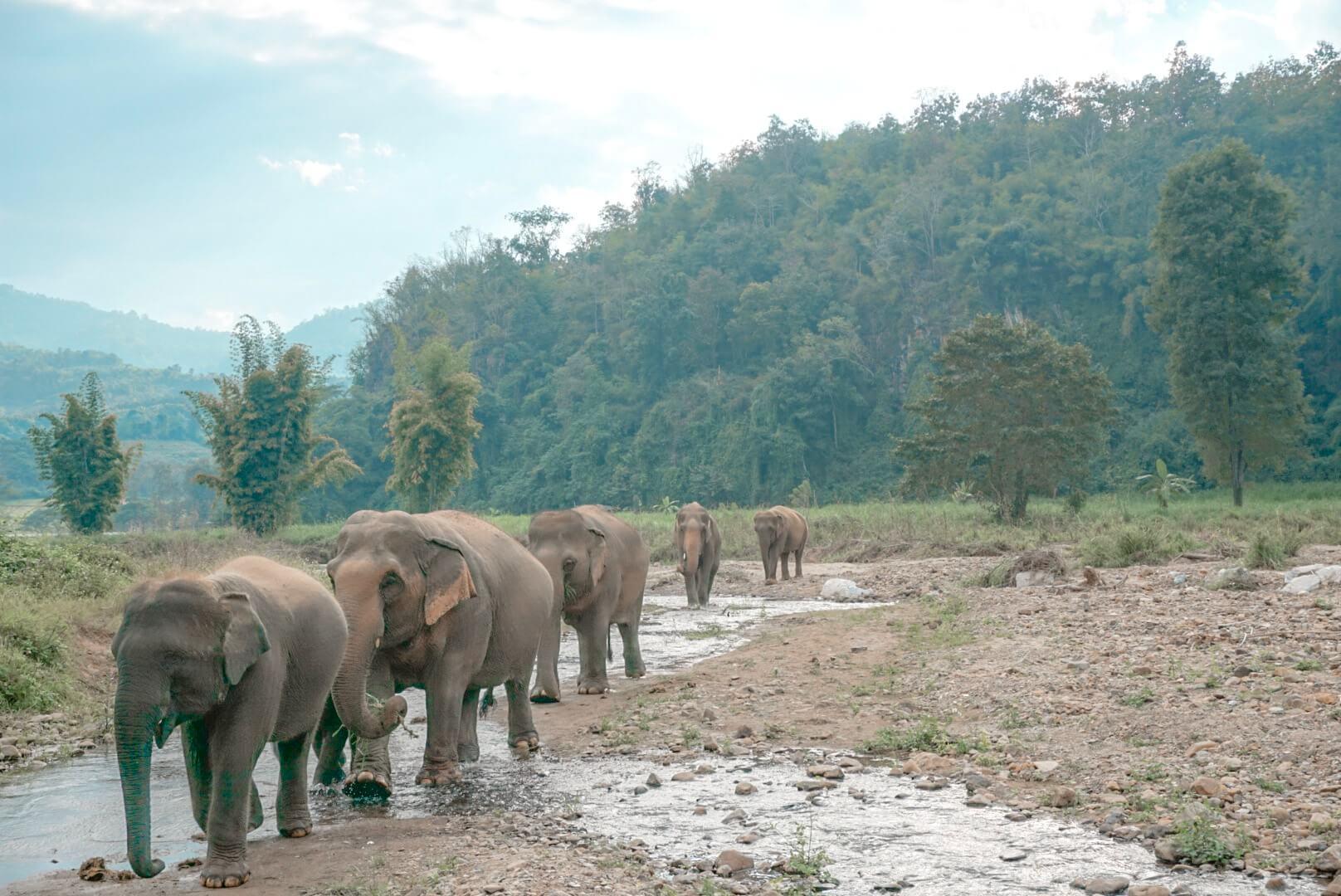 comment rencontrer les éléphants thailande