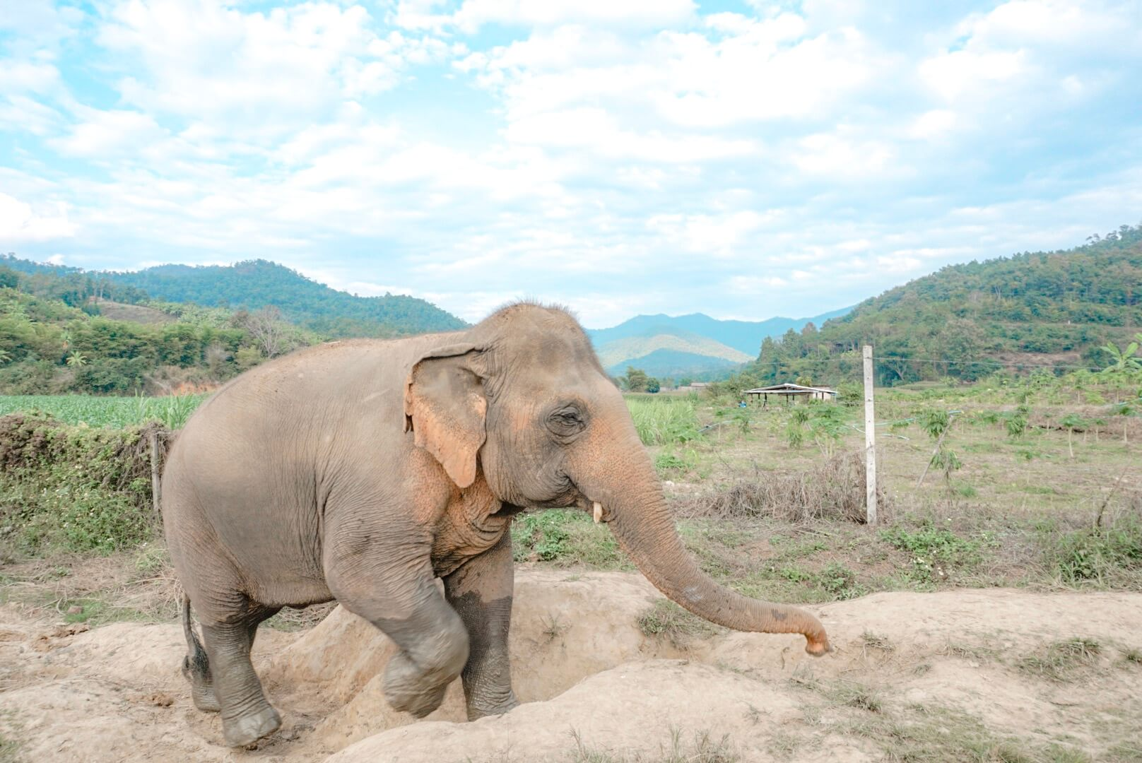 comment rencontrer les éléphants en les protégeant