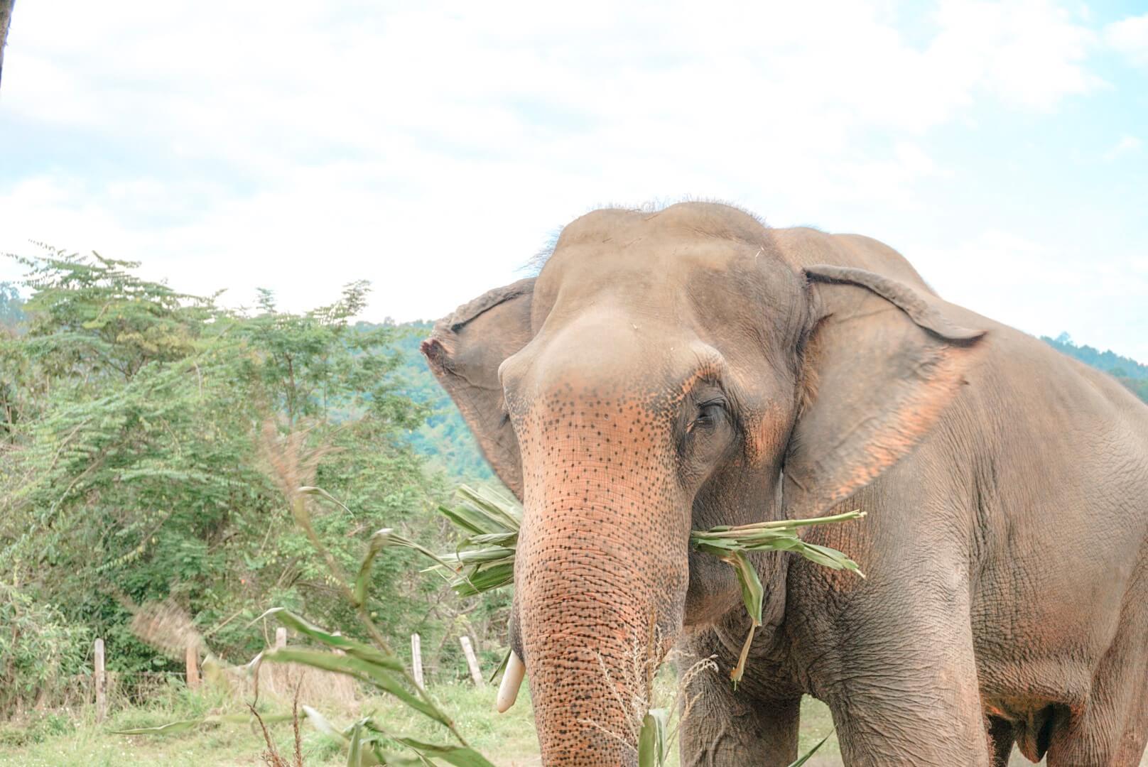 centre protection sauvegarde des éléphants