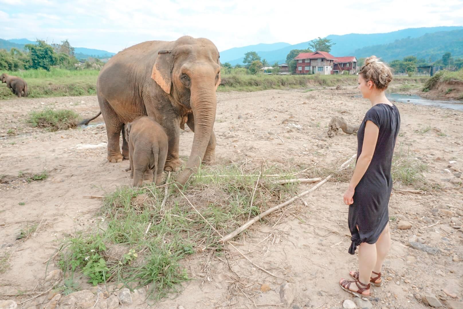 centre protection éléphant asie