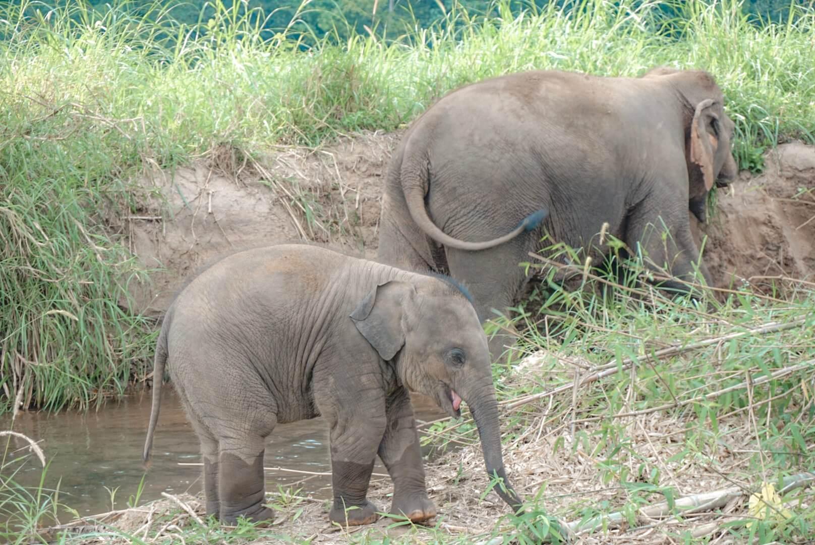 elephant asie ne pas monter dessus