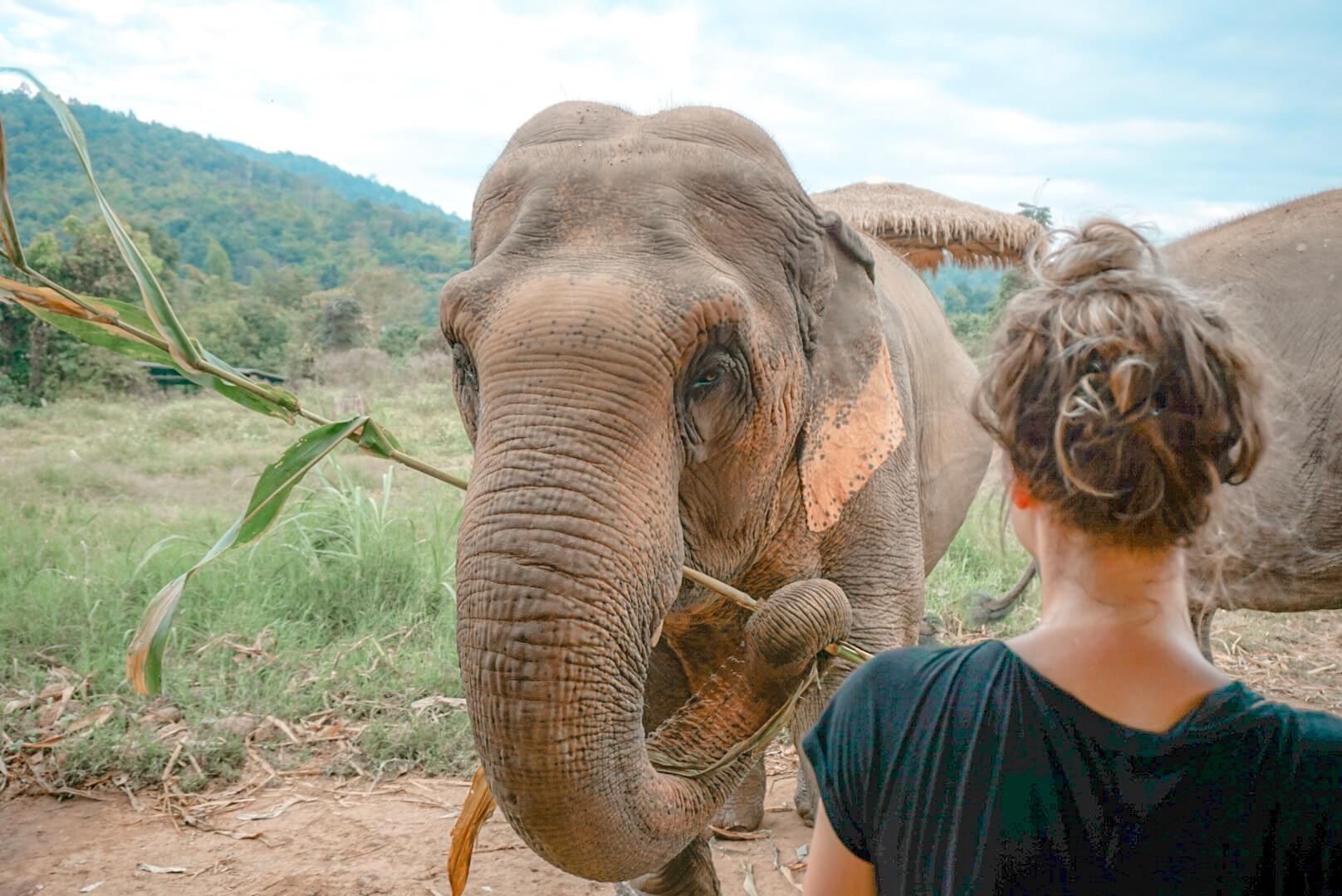 les éléphants en Asie thailande