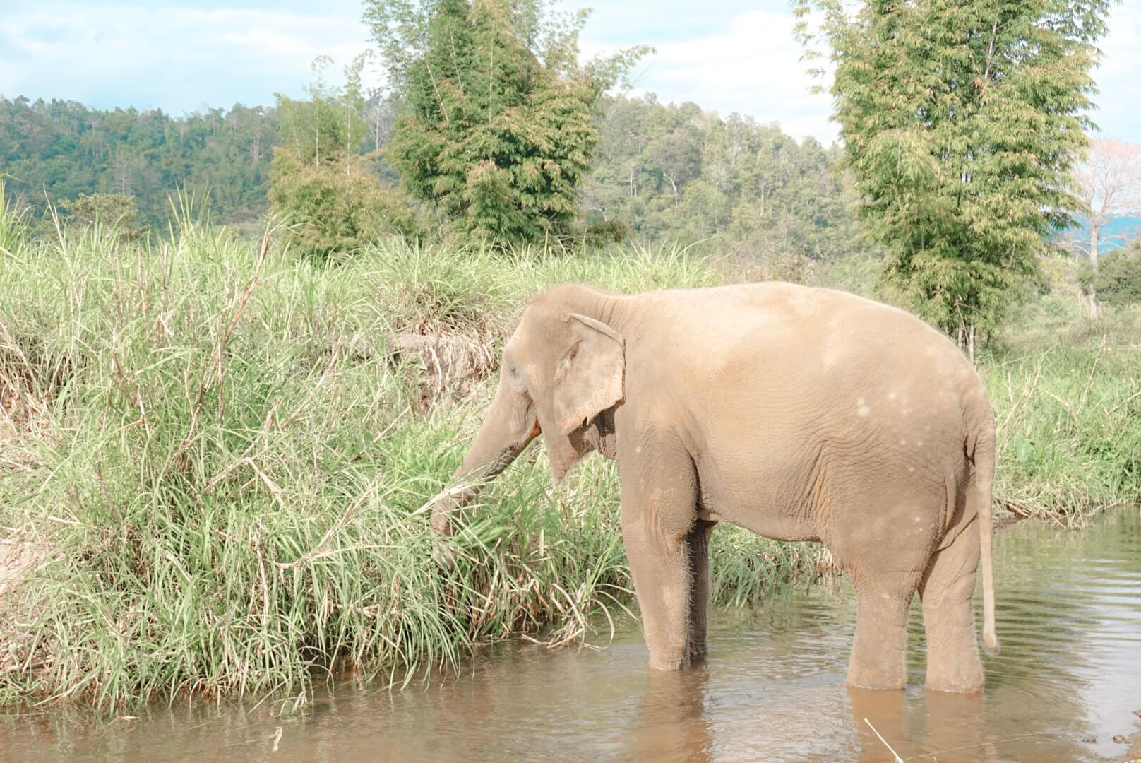 marcher avec des éléphants thailande