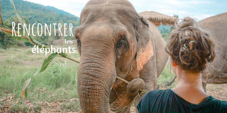 rencontrer les éléphants en thailande sans se tromper