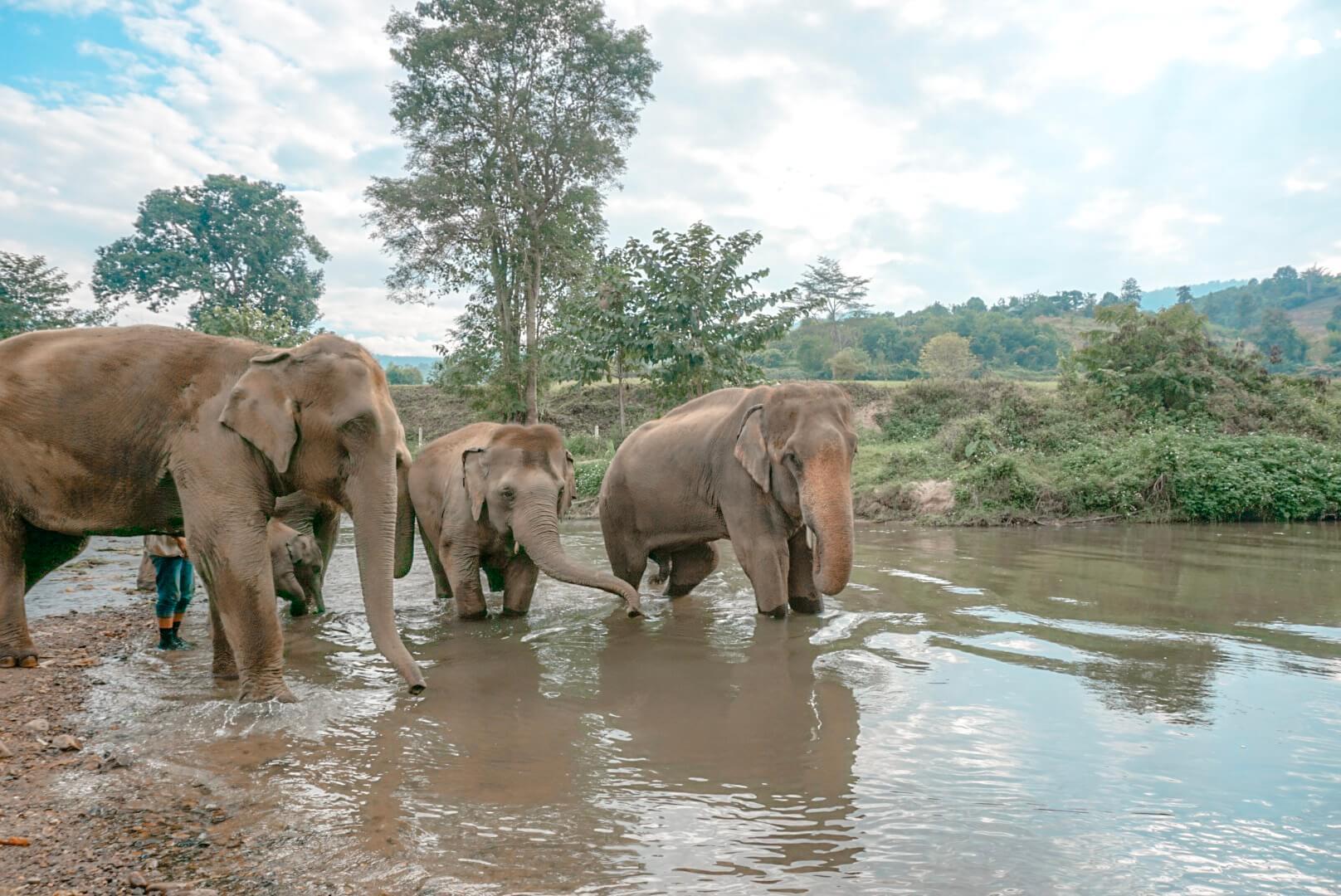 éléphants thailande