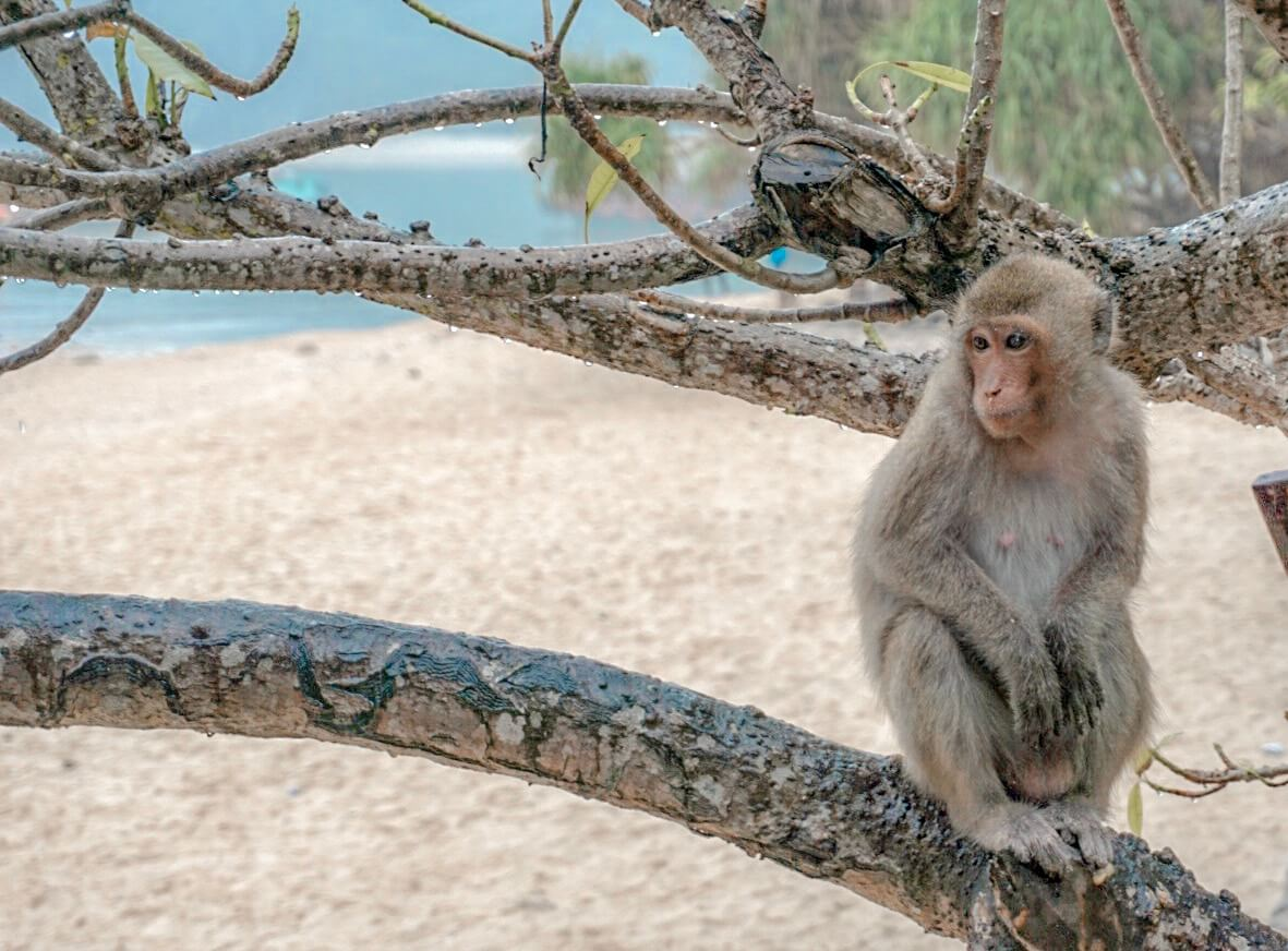 Monkey Island Lan Ha baie Vietnam Cat ba