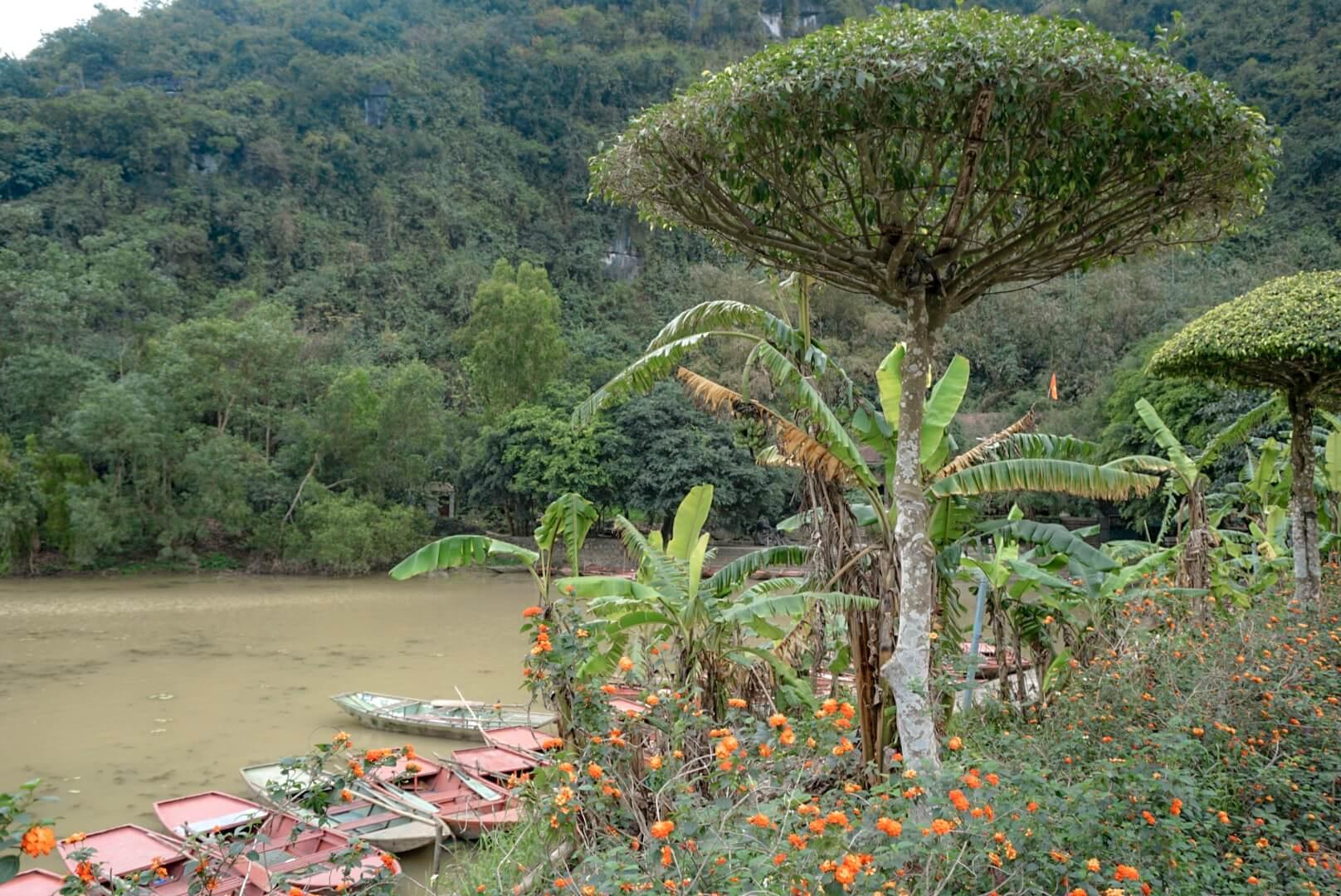 Parc oiseau Tam Coc Vietnam