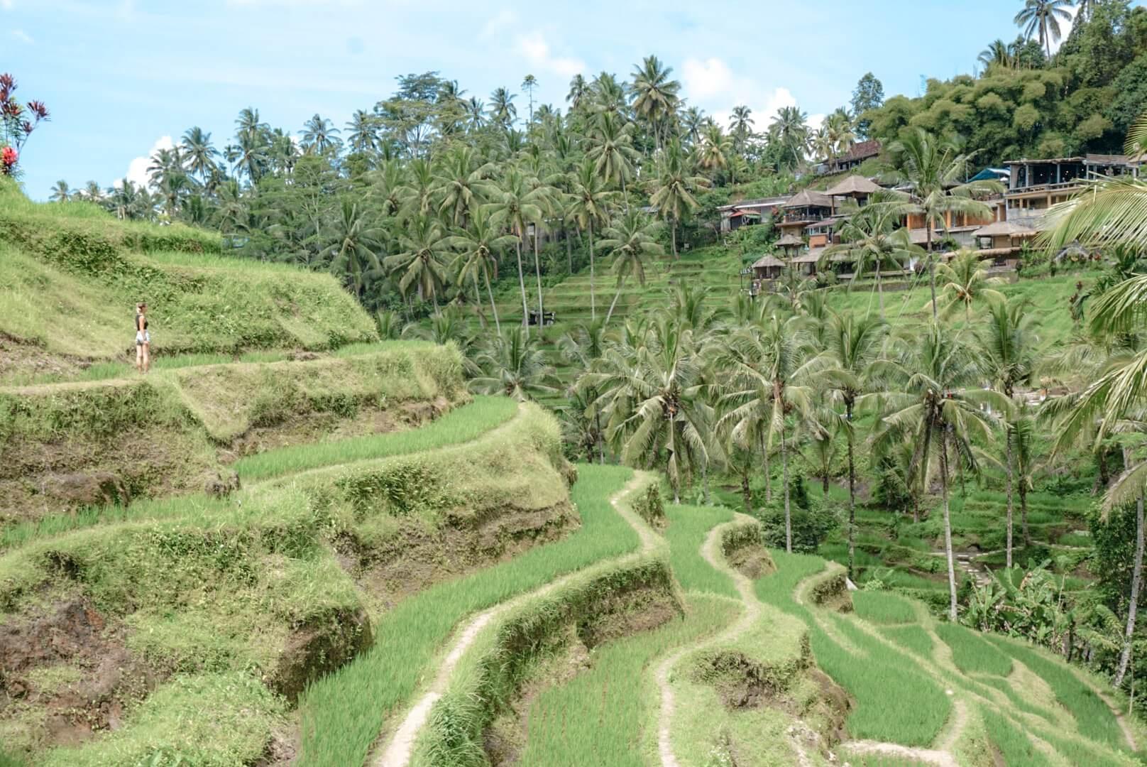 Comment se rendre dans le rizières de Tegalalang depuis Ubud