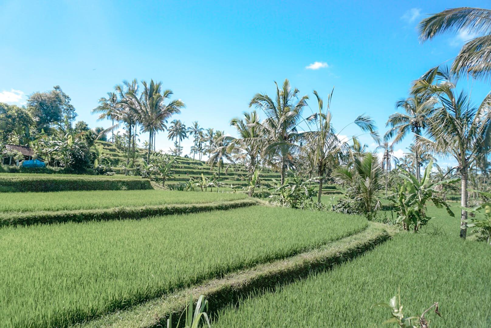 Découvrir et visiter Rizière près d'Ubud Bali