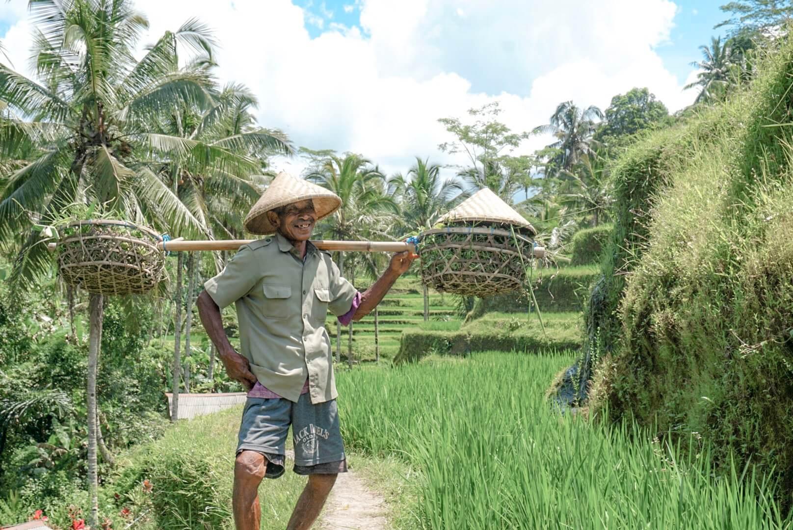 visiter rizières tegalalang bali