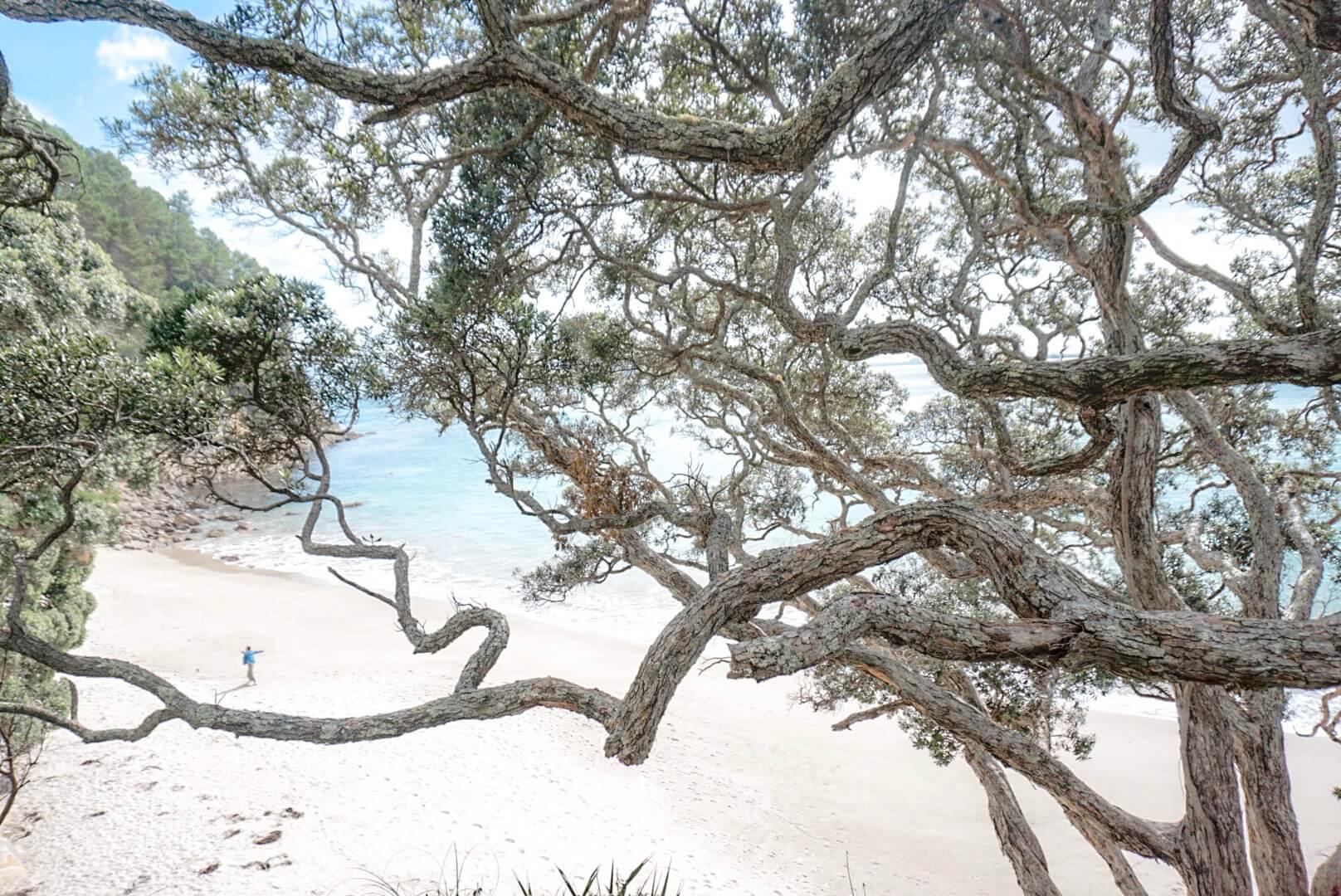 se promener sur le chemin et la plage coromandel nouvelle Zélande