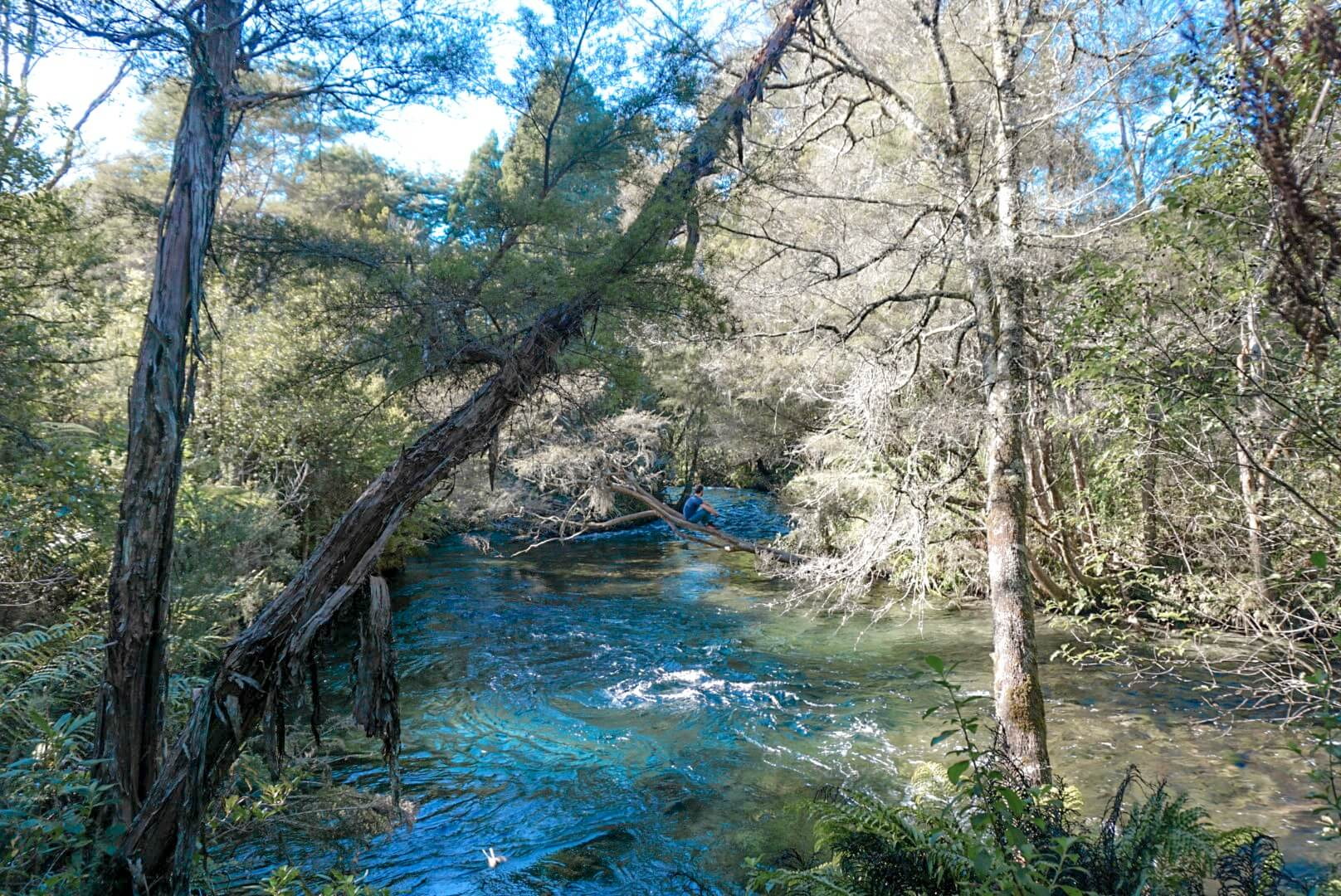 Pupu Springs sources à visiter