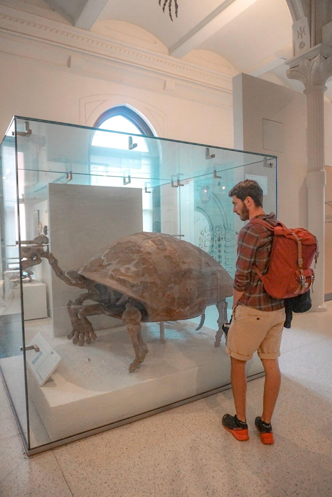 visiter musée d'histoire naturelle new york