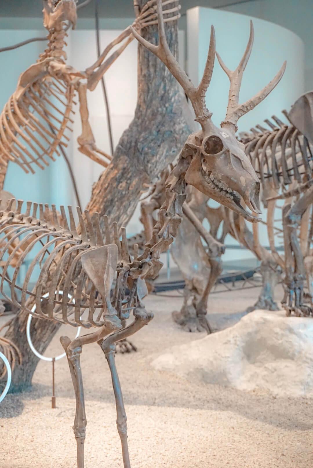 musee histoire naturelle new york prix entrée
