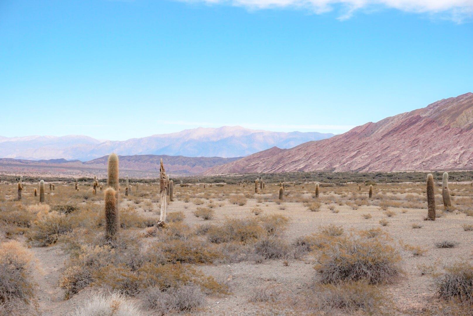 comment visiter nord argentine road trip los cardones