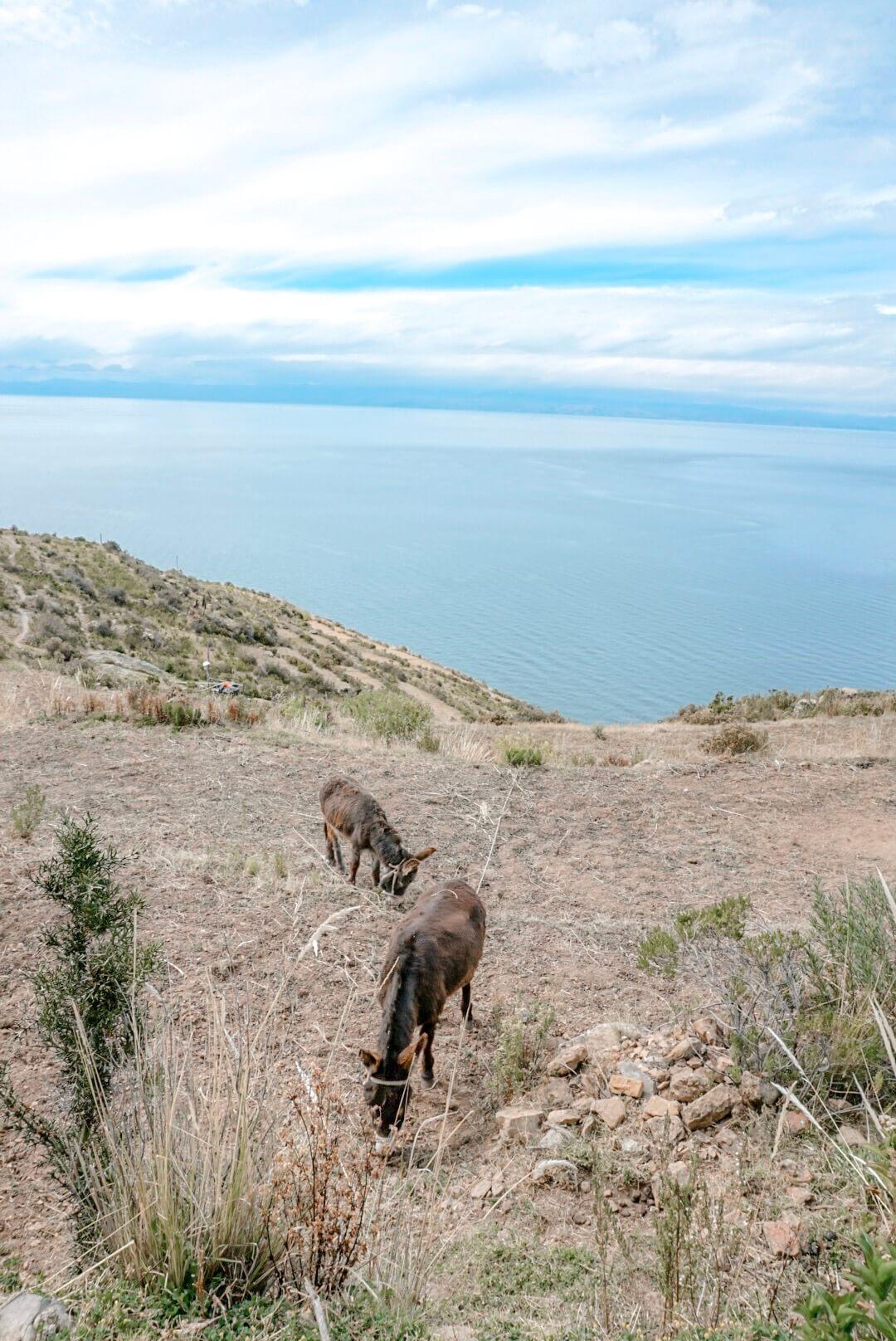 visiter isla del sol bolivie titicaca blog